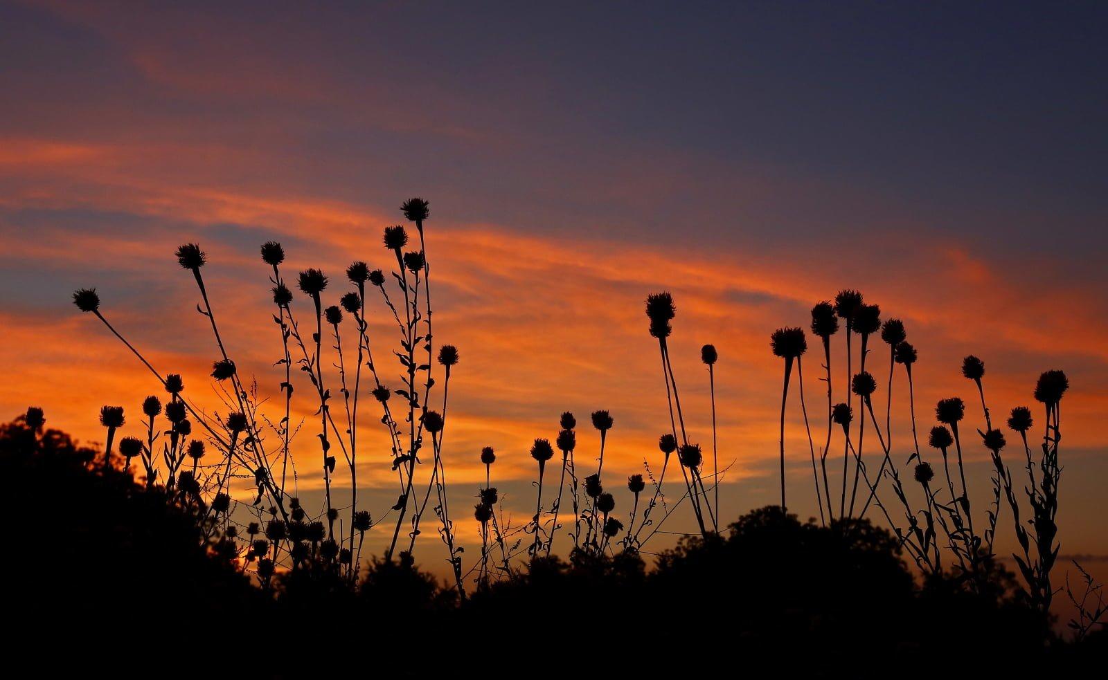 Wschód słońca nad pastwiskiem w pobliżu Commerce, Texas, fot. EPA/LARRY W. SMITH