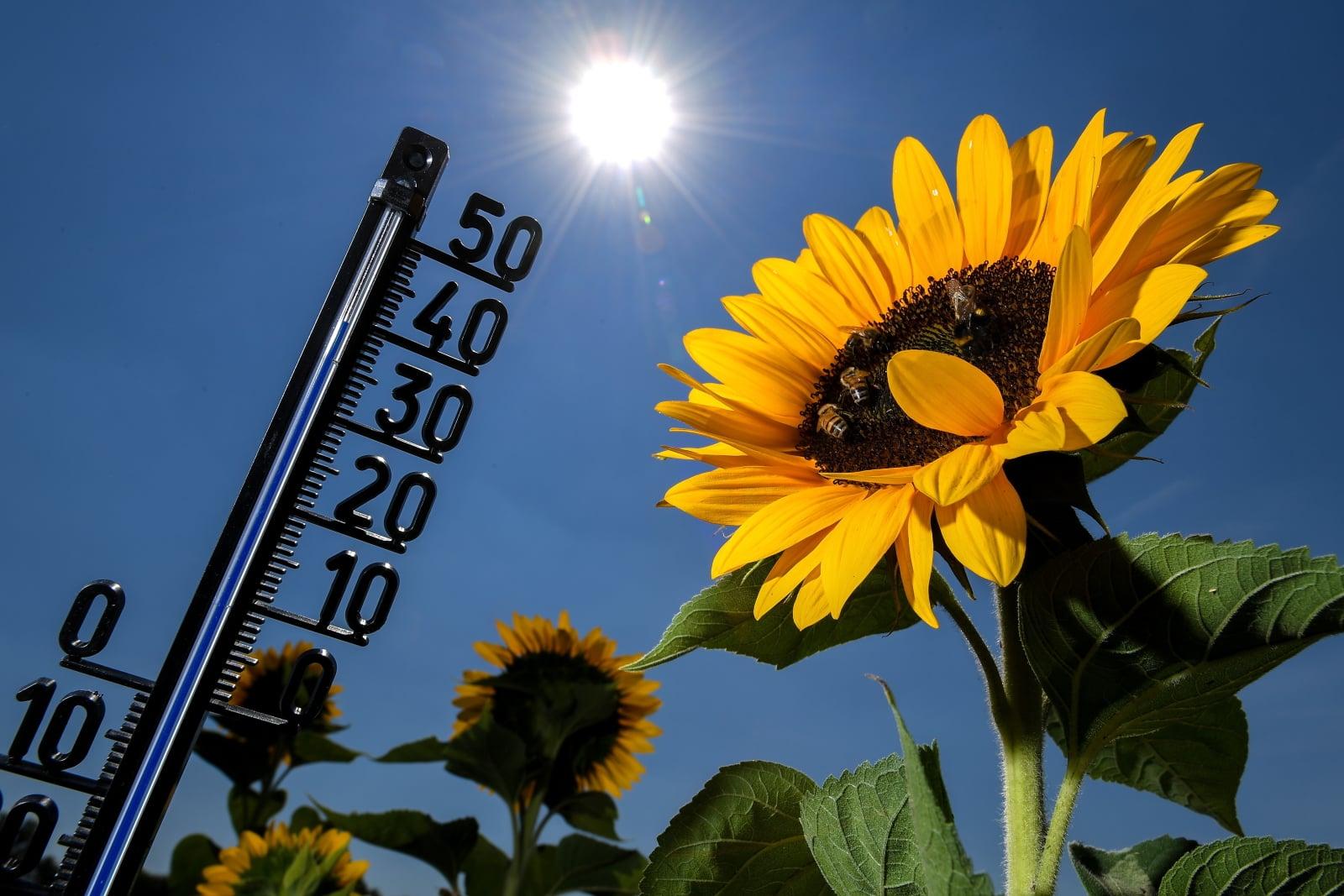 Wysokie temperatury w w Kamp-Lintfort, Niemcy, fot. EPA/SASCHA STEINBACH