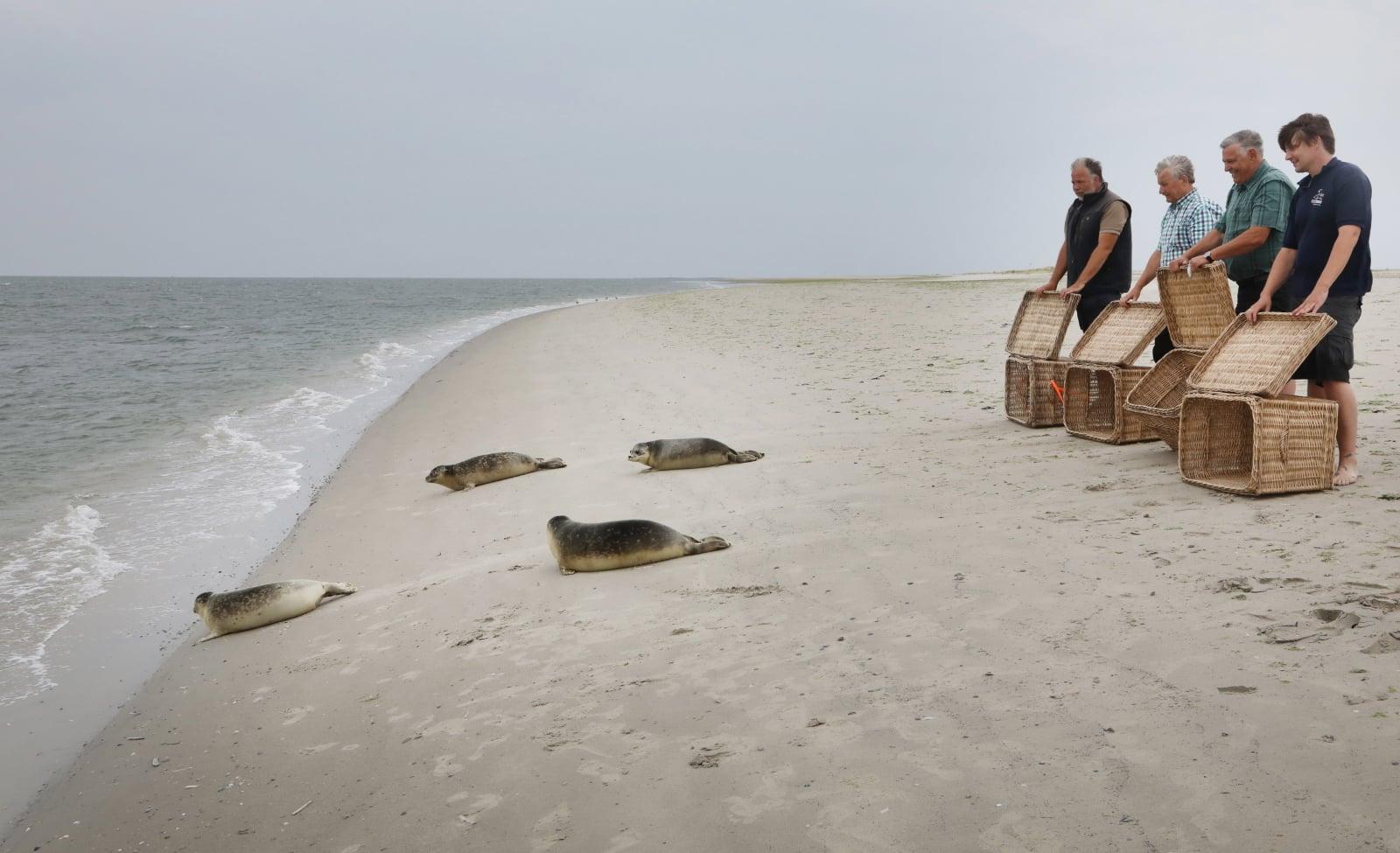Opuszczone foki w Niemczech fot. EPA/FOCKE STRANGMANN