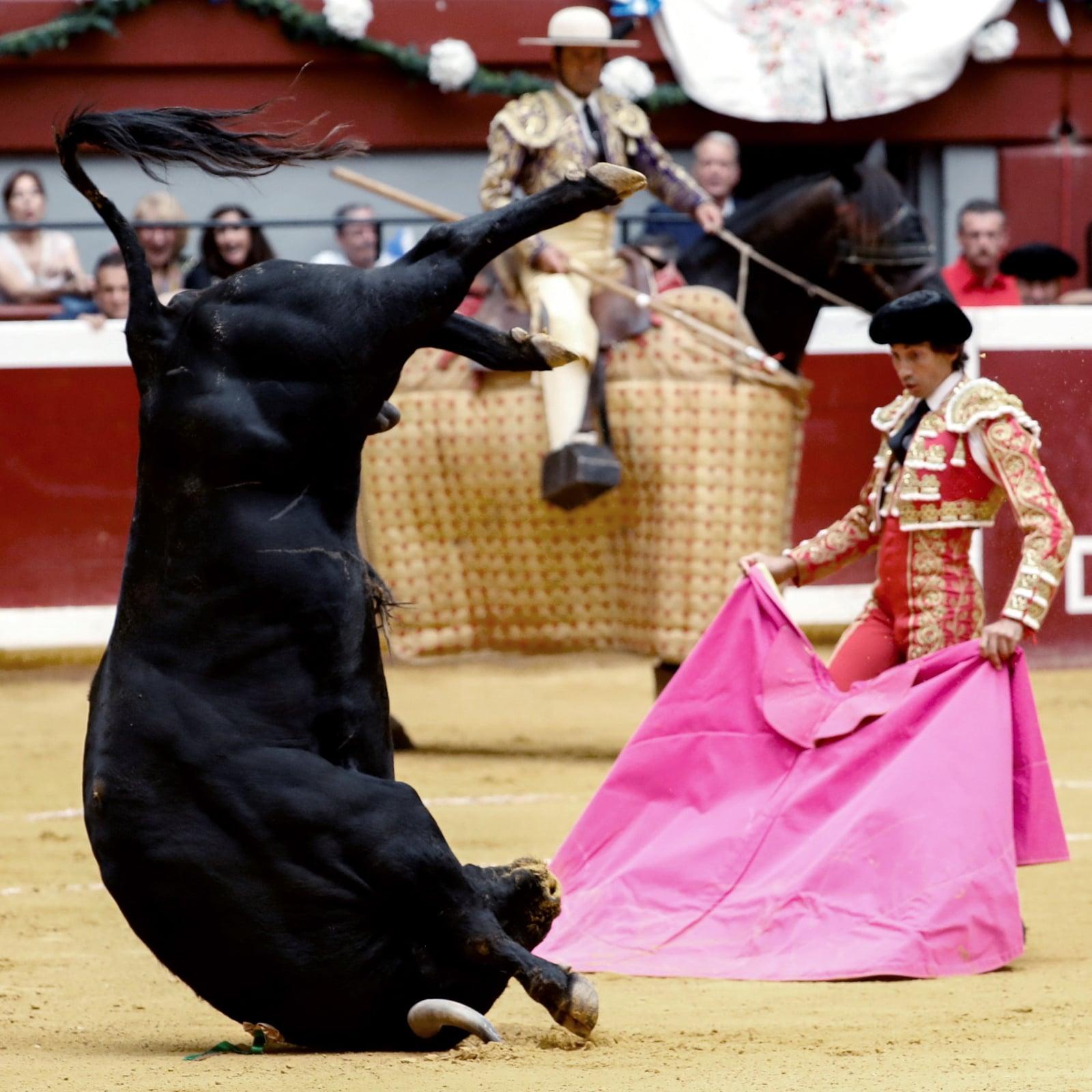 Hiszpańska corrida fot. EPA/Juan Herrero