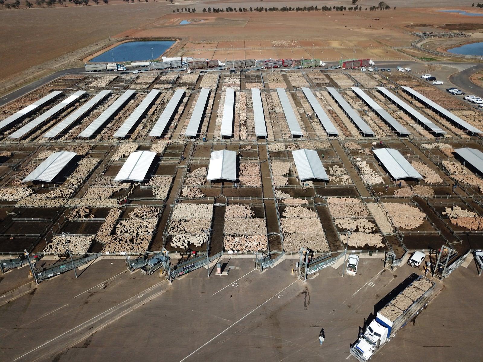 Susza w Australii fot. EPA/DEAN LEWINS