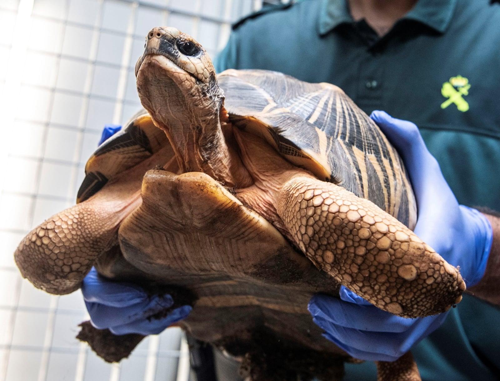 Hiszpański żółw wyłowiony na plaży w Majorce