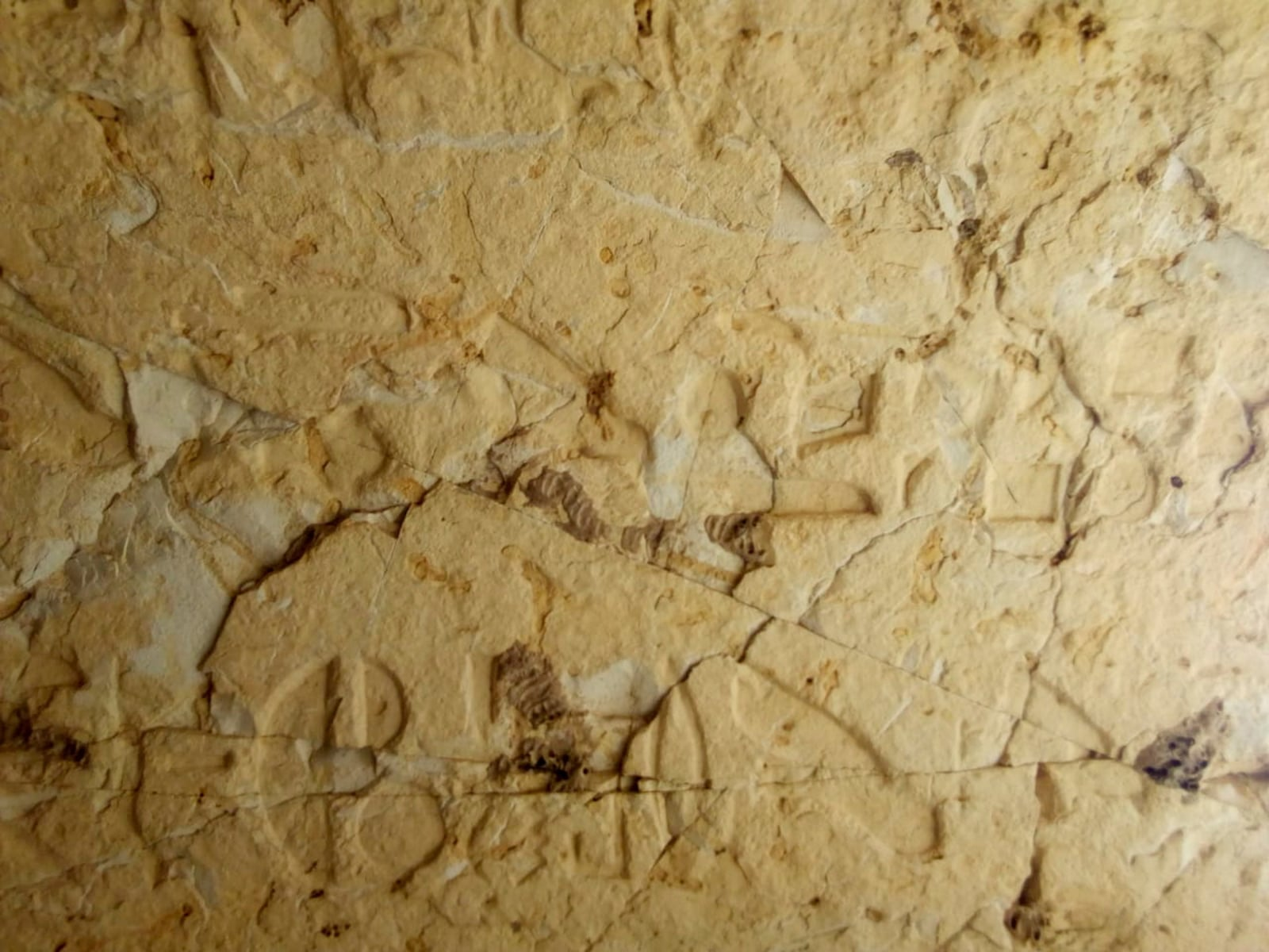 Nowe odkrycia archeologiczne, tym razem w Egipcie.