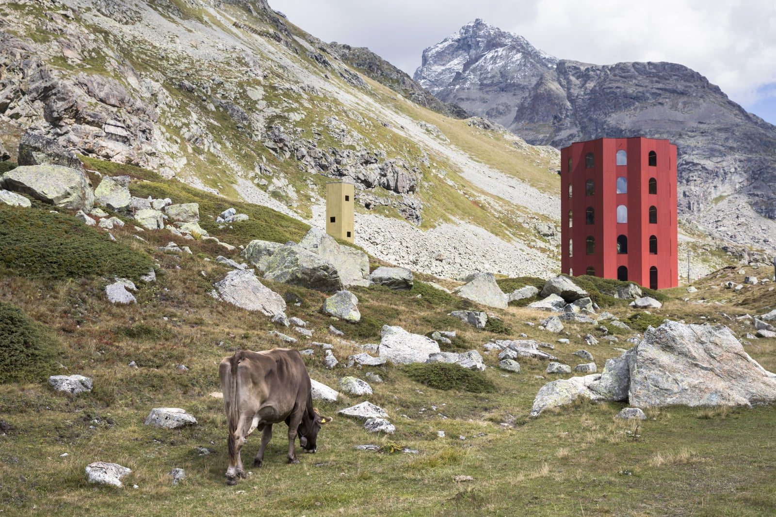 Krowa je trawę w pobliżu teatru Origen, Szwajcaria. Fot. PAP/EPA/PETER KLAUNZER