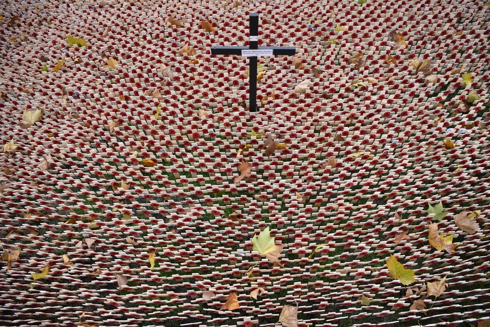 Krzyżyki na cmentarzu Westminsterskim w setną rocznicę zakończenia I Wojny Światowej. Fot. PAP/EPA/NEIL HALL