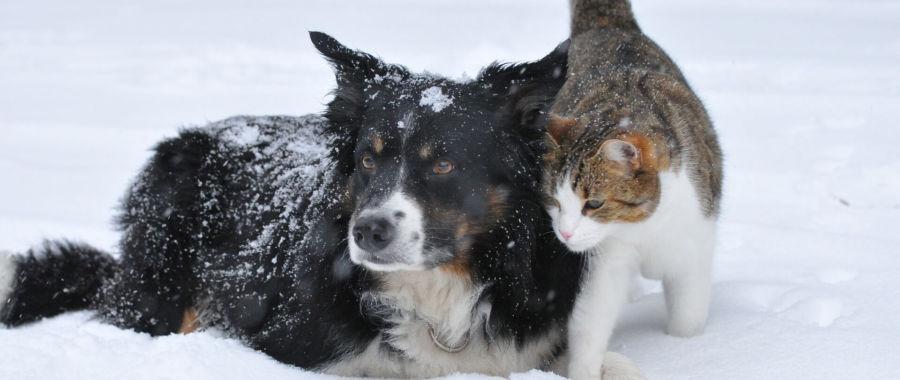 Kot, pies
