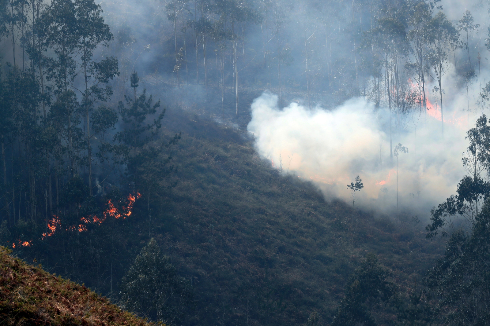 Pożar w Hiszpanii fot. EPA/JOSE LUIS CEREIJIDO