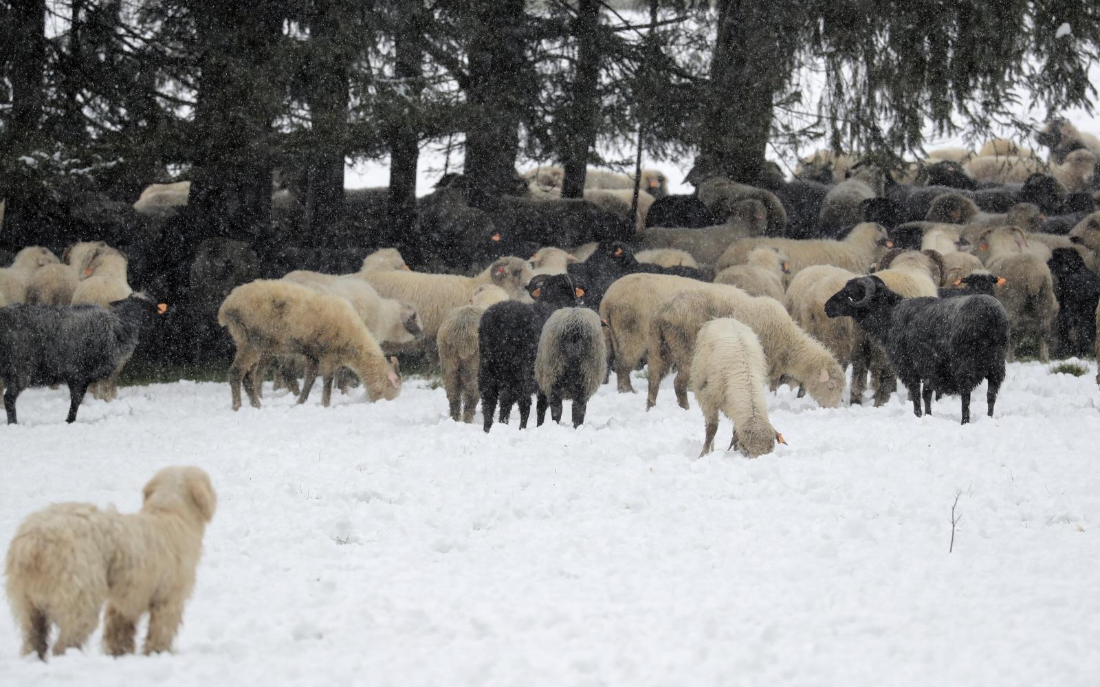 Zakopane, powrót zimy PAP/Grzegorz Momot