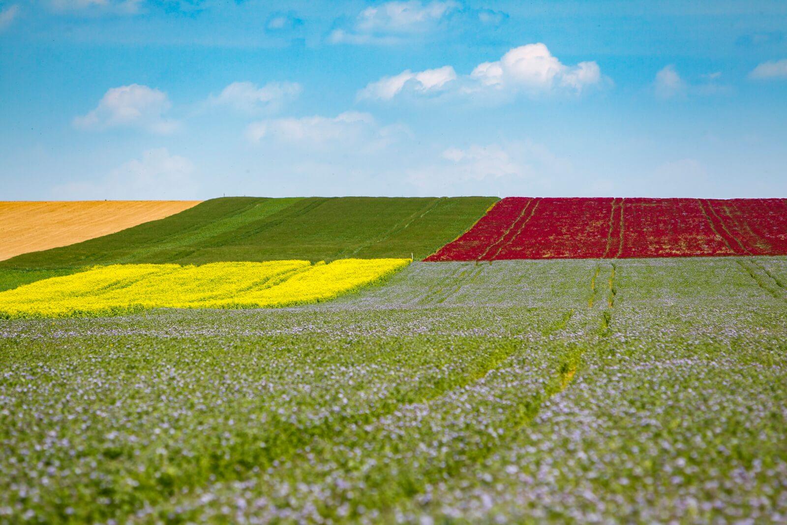Krajobraz w Holadnii fot. EPA/Gyorgy Varga
