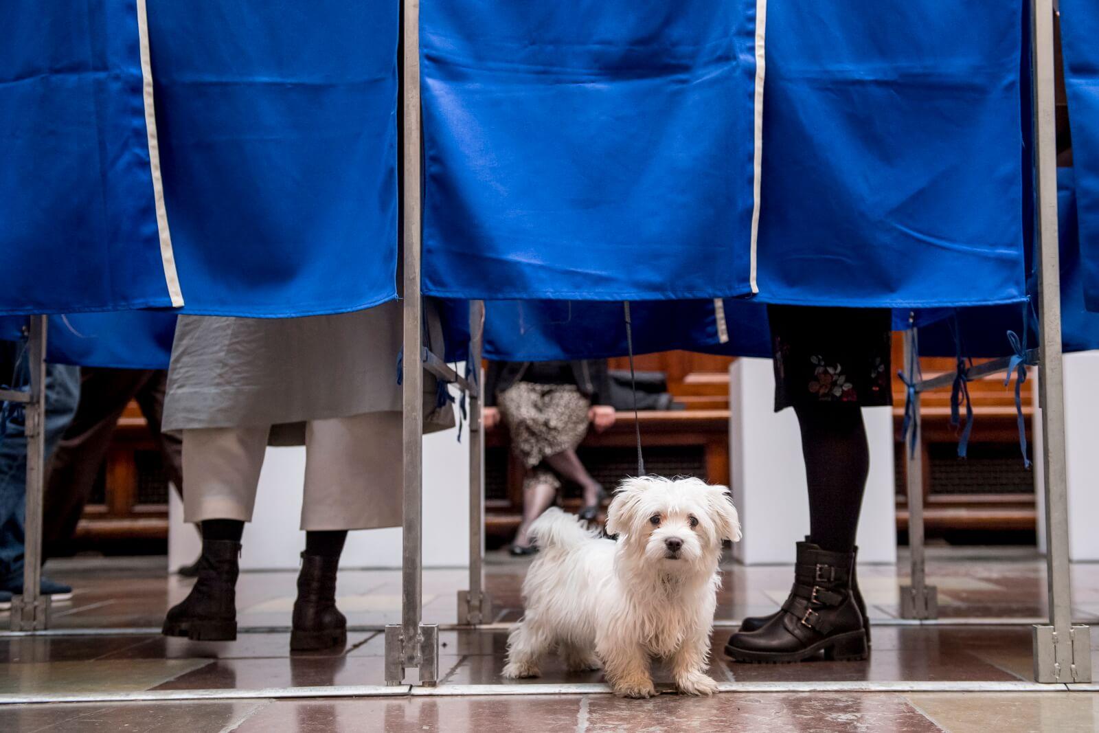 Wybory do Parlamentu Europejskiego w Danii fot. EPA/Mads Claus