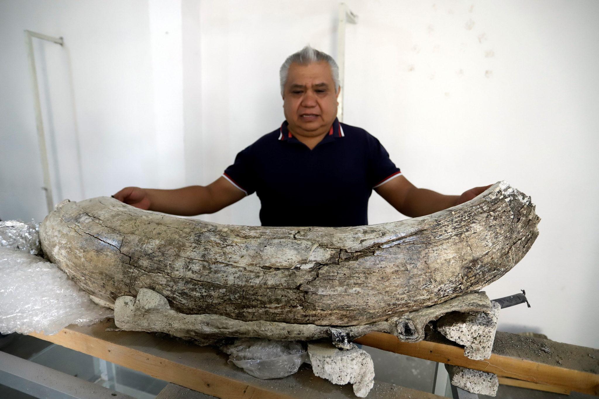 Szczątki mamuta znalezionego w mieście San Francisco Totimehuacan w stanie Puebla w Meksyku, fot. Hilda Rios, PAP/EPA