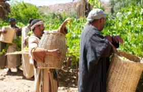 robotnicy w winnicy