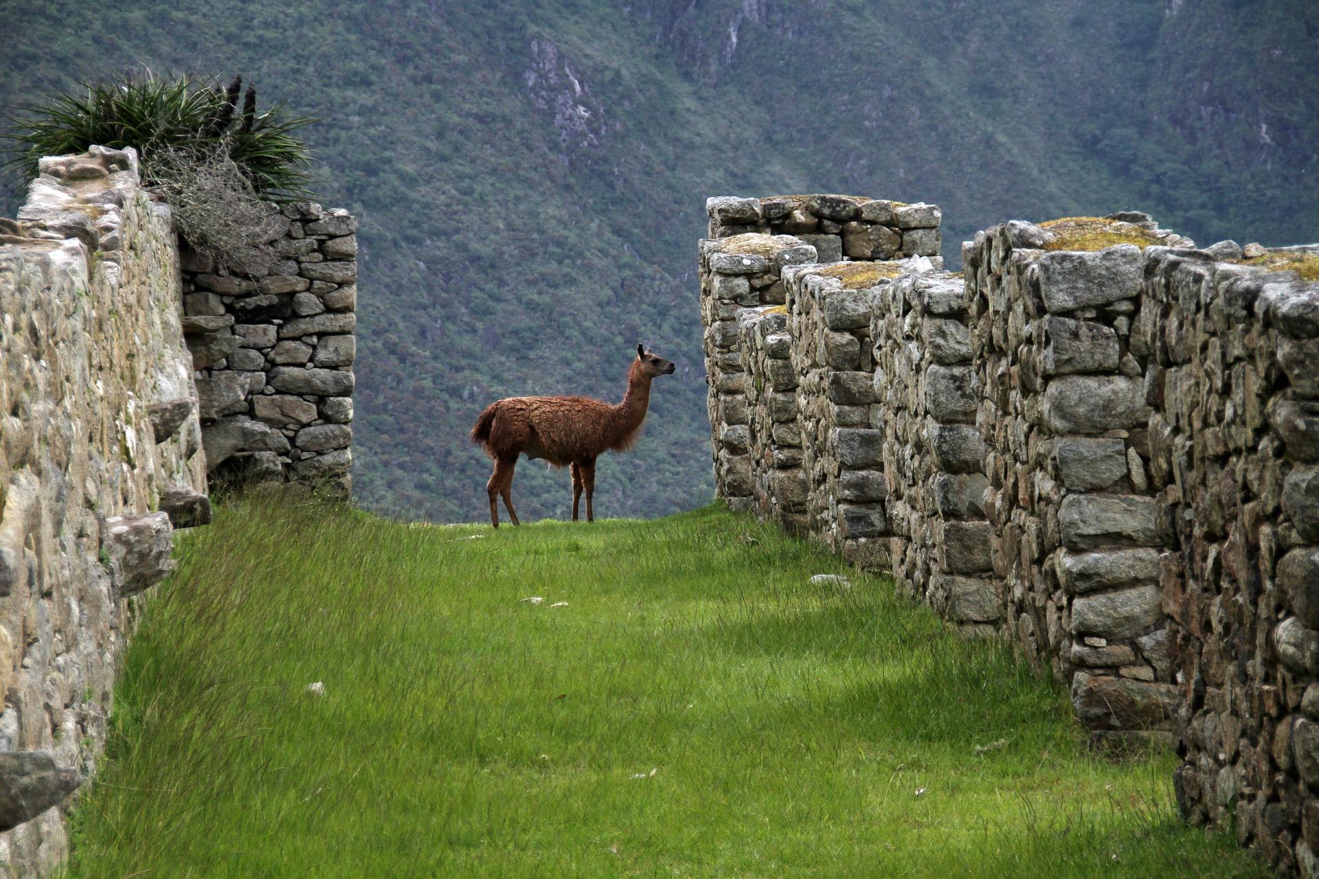 Inkowie