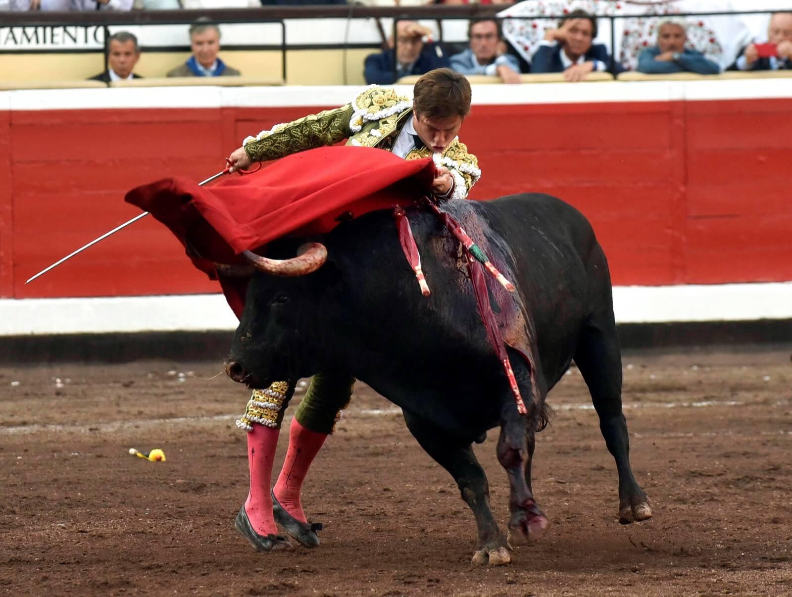 Tradycyjna corrida w Hiszpanii fot. EPA/Miguel Tona