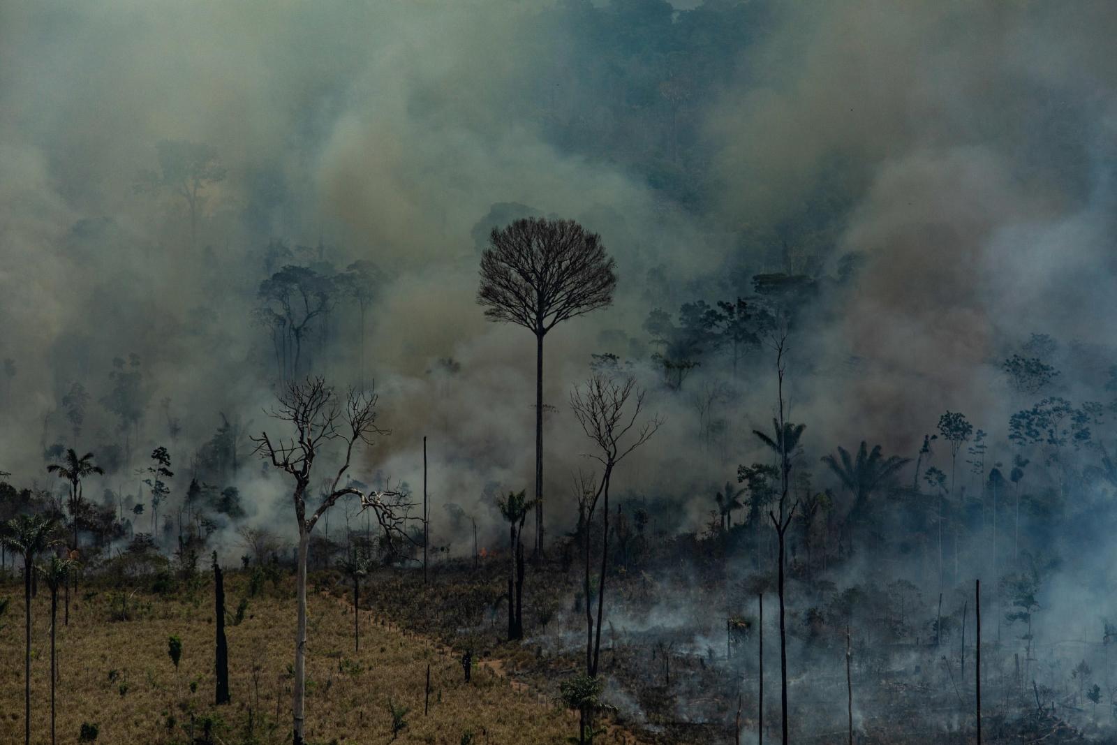 EPA/Victor Moriyama / Greenpeace Brazil