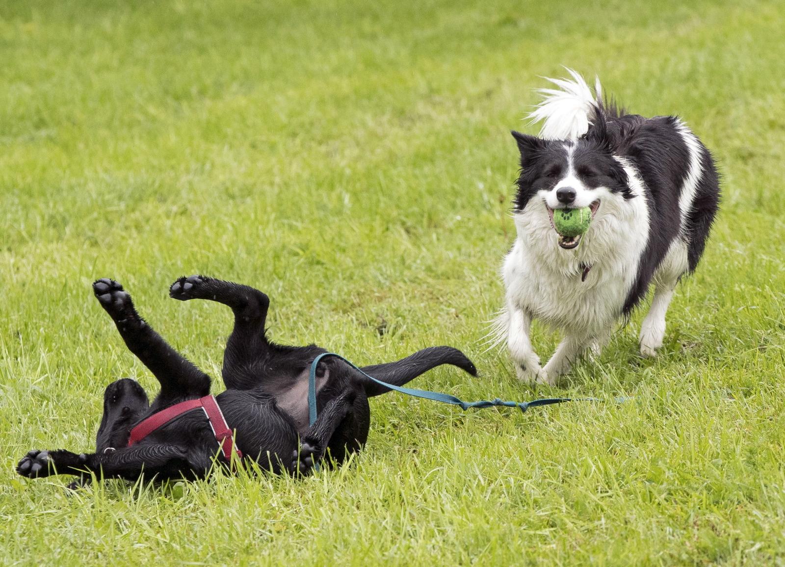 Psy w Norwegii fot. EPA/Terje Pedersen NORWAY OUT
