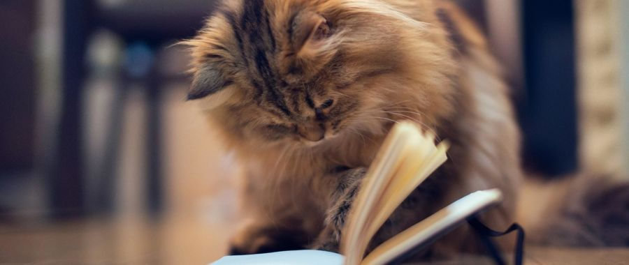 kot książkia