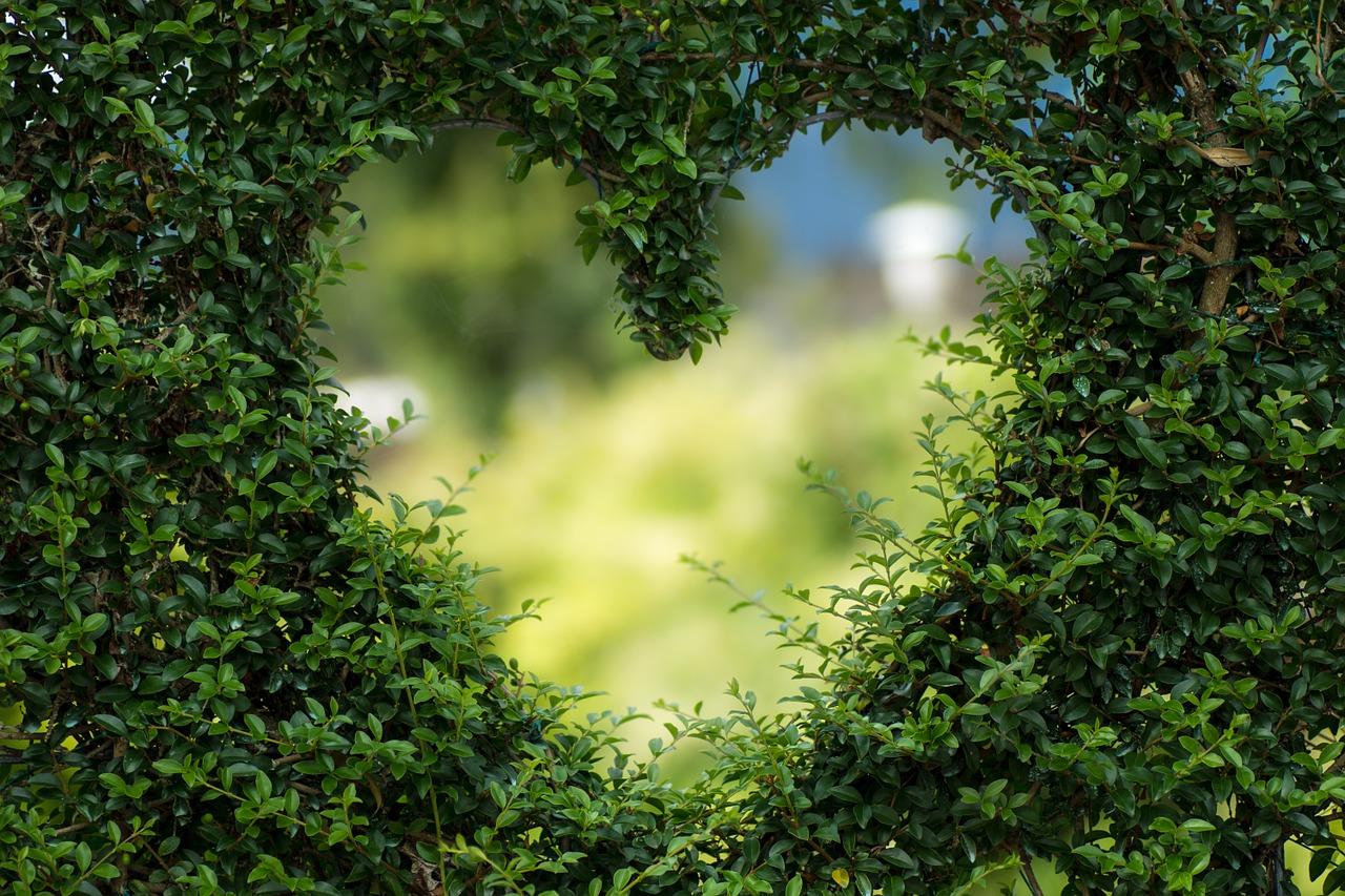serce ekologia