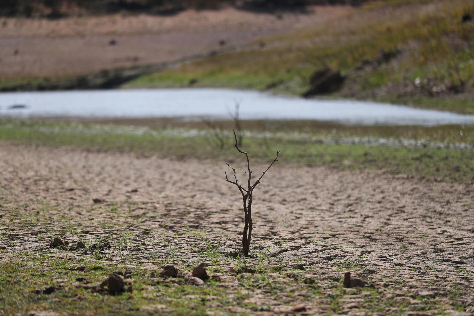 Ekstremalna susza fot. EPA/NUNO VEIGA
