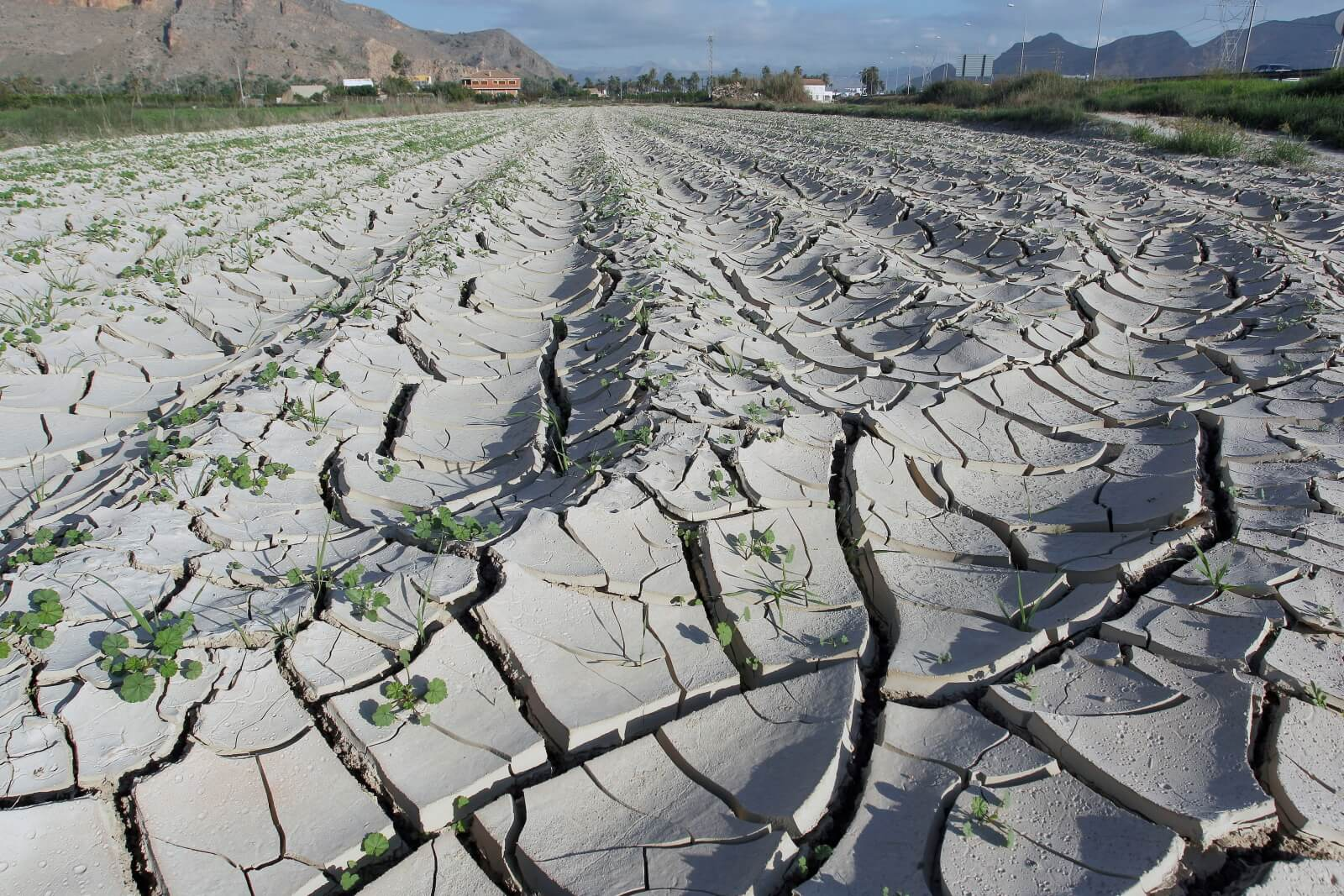 Susza w Hiszpanii fot. EPA/MORELL