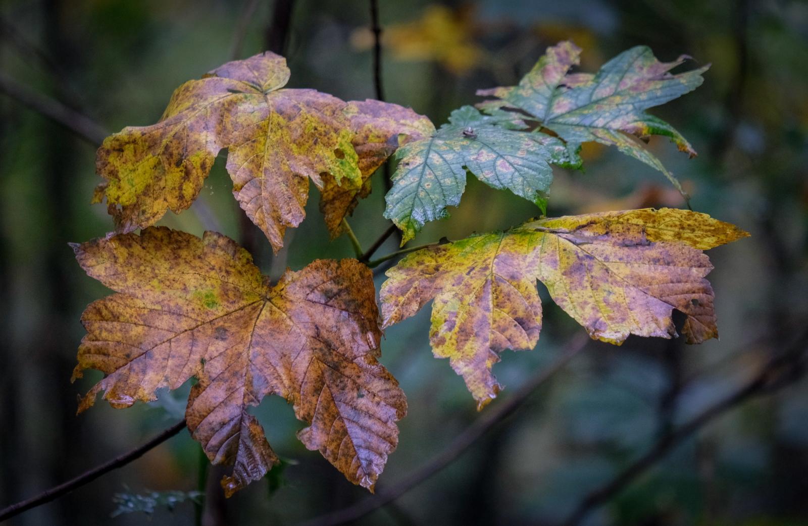 Jesień w Niemczech fot. EPA/FOCKE STRANGMANN