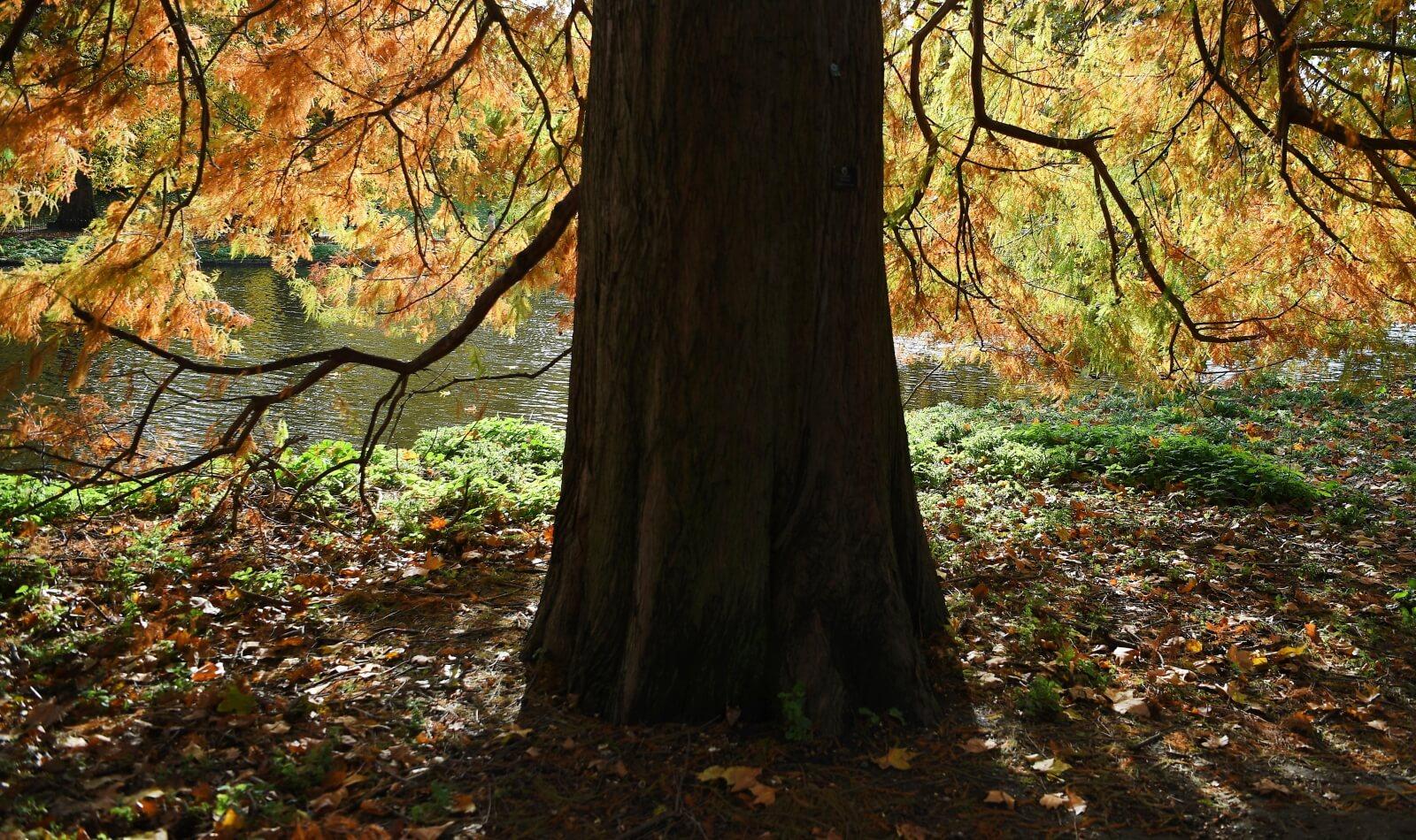 Jesień w Wielkiej Brytanii fot. EPA/ANDY RAIN