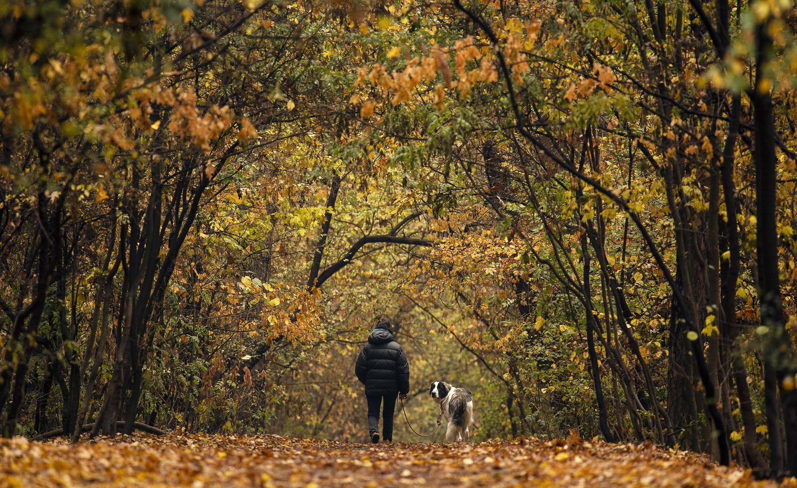 Jesienny spacer z psem fot. EPA/VASSIL DONEV