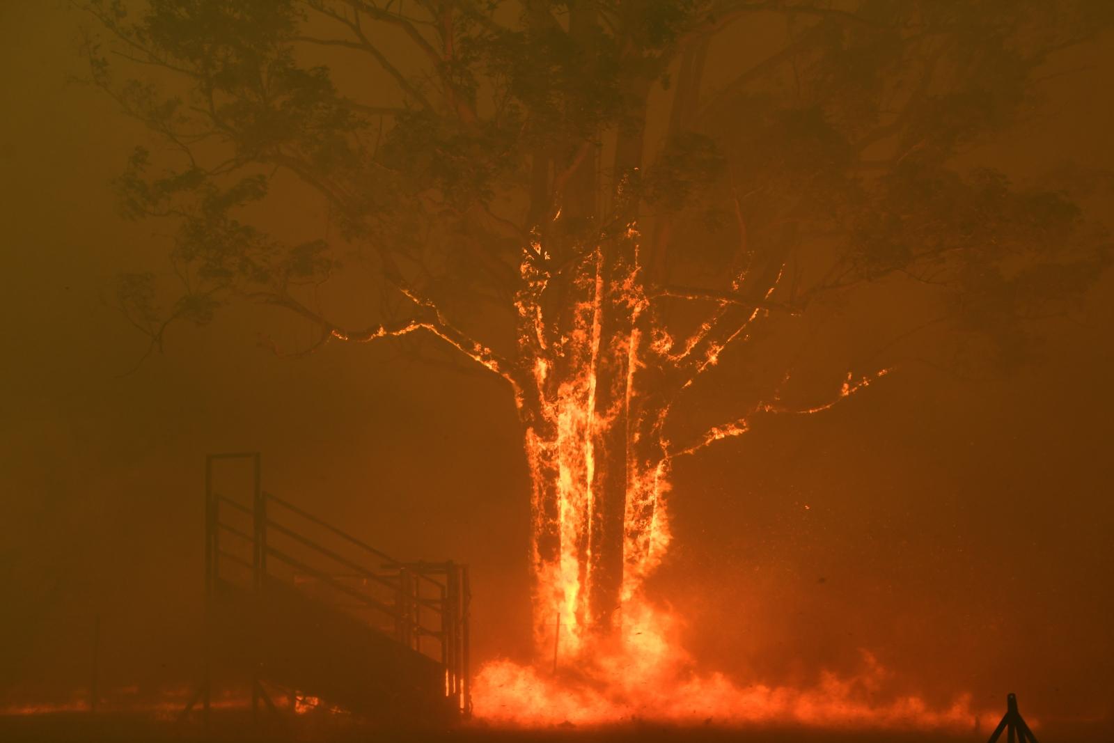 Pożary buszu w Australii  EPA/DEAN LEWINS