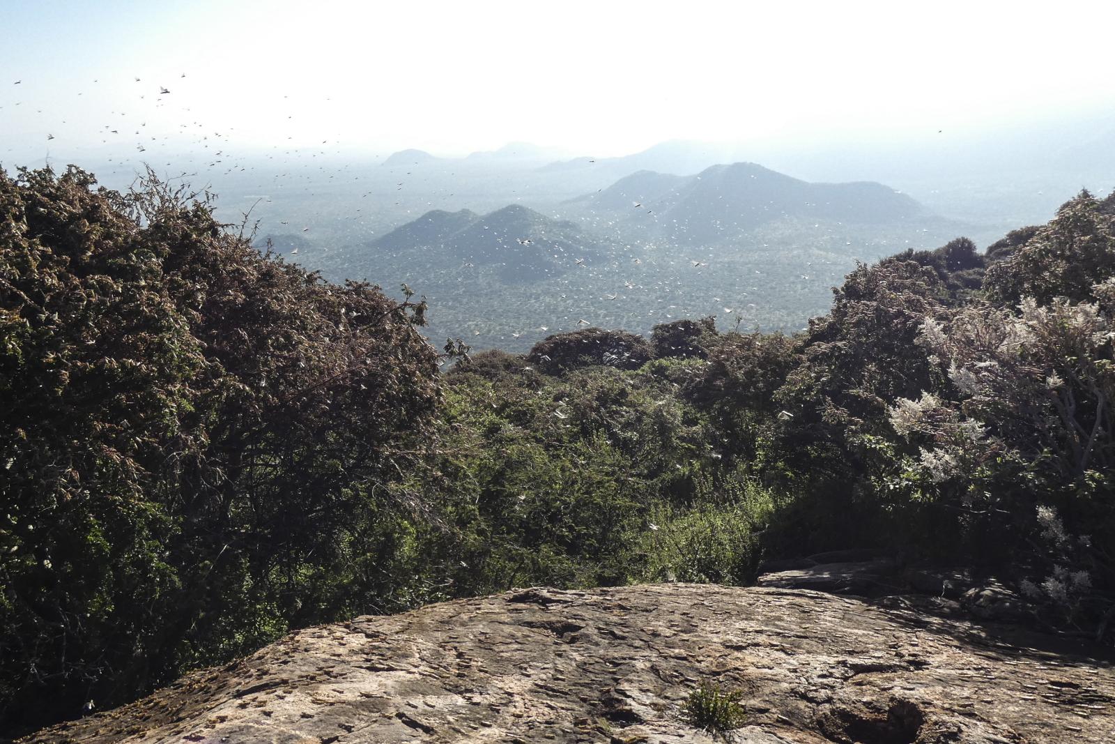 Krajobraz Kenii fot. EPA/THE LAIKIPIA FARMERS' ASSOCIATION