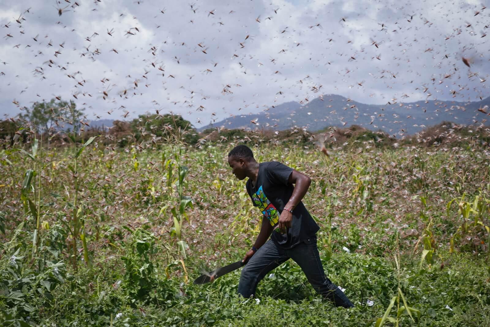 Kryzys upraw w Kenii fot. EPA/DAI KUROKAWA