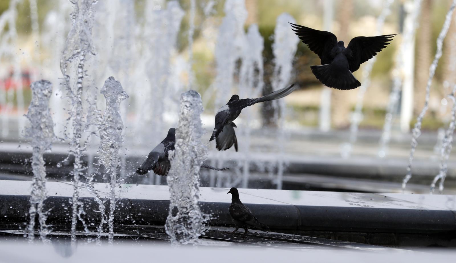 Ptaki w fontannie fot. EPA/YAHYA ARHAB