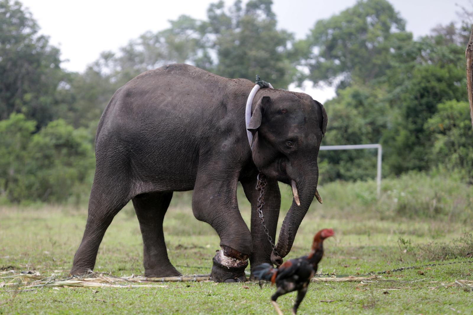 Młody słoń fot. EPA/HOTLI SIMANJUNTAK