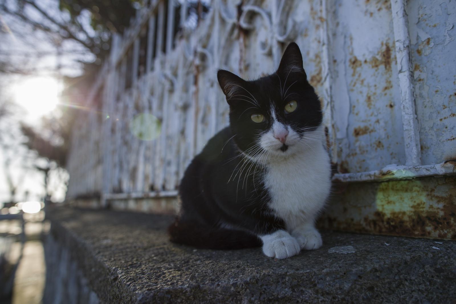 Kot w Istambule fot. EPA/TOLGA BOZOGLU