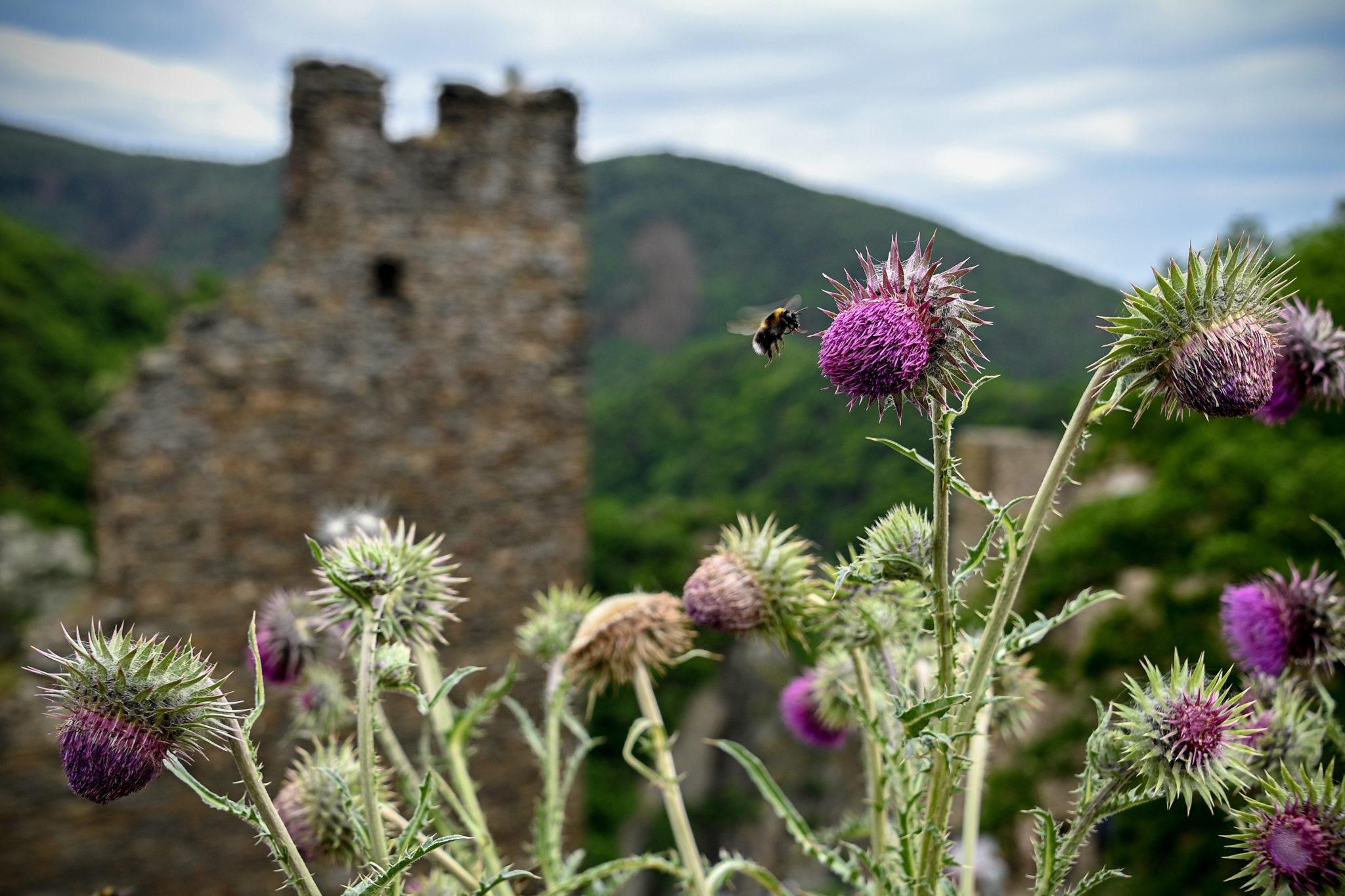 Niemcy: ruiny zamku Are w Altenahr, fot. EPA/SASCHA STEINBACH