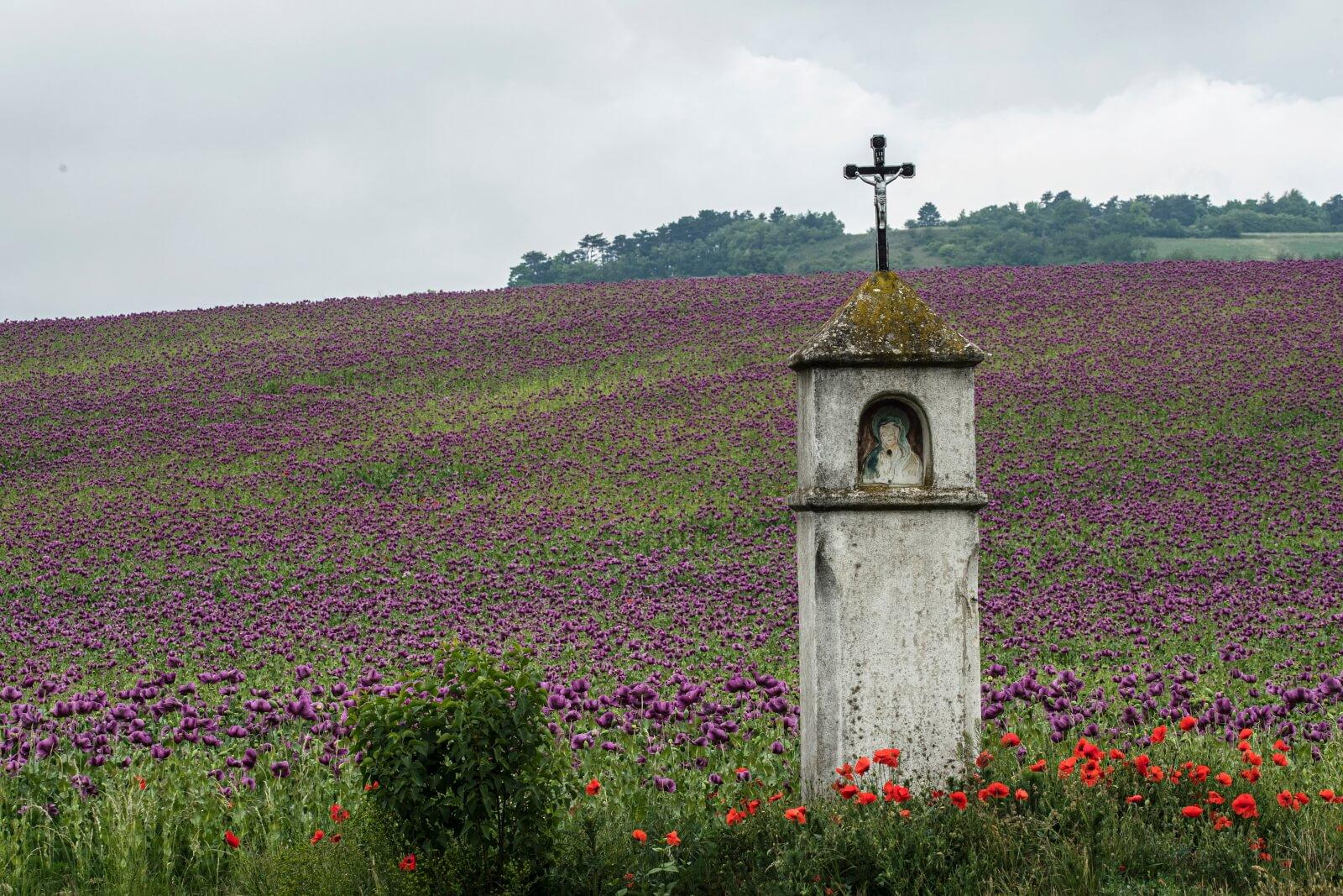 Austria fot. EPA/CHRISTIAN BRUNA