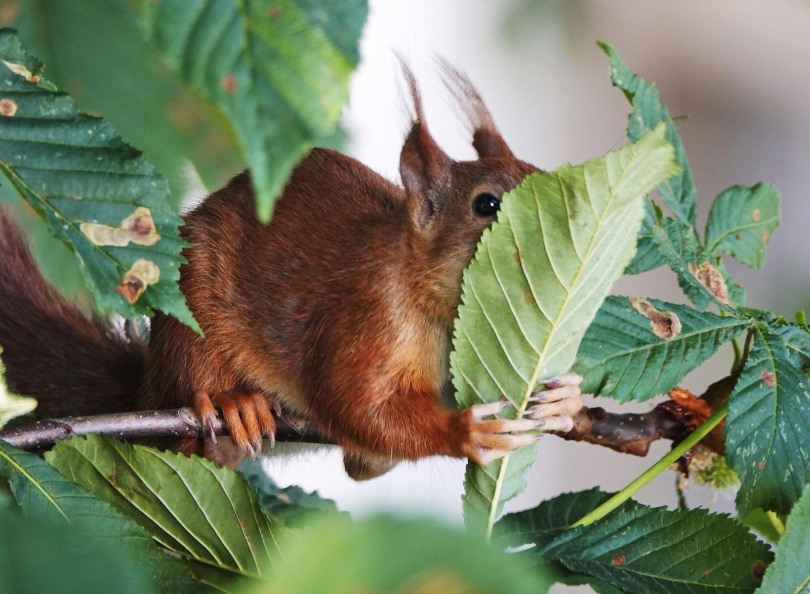 Wiewiórka w parku fot.  EPA/MAURITZ ANTIN