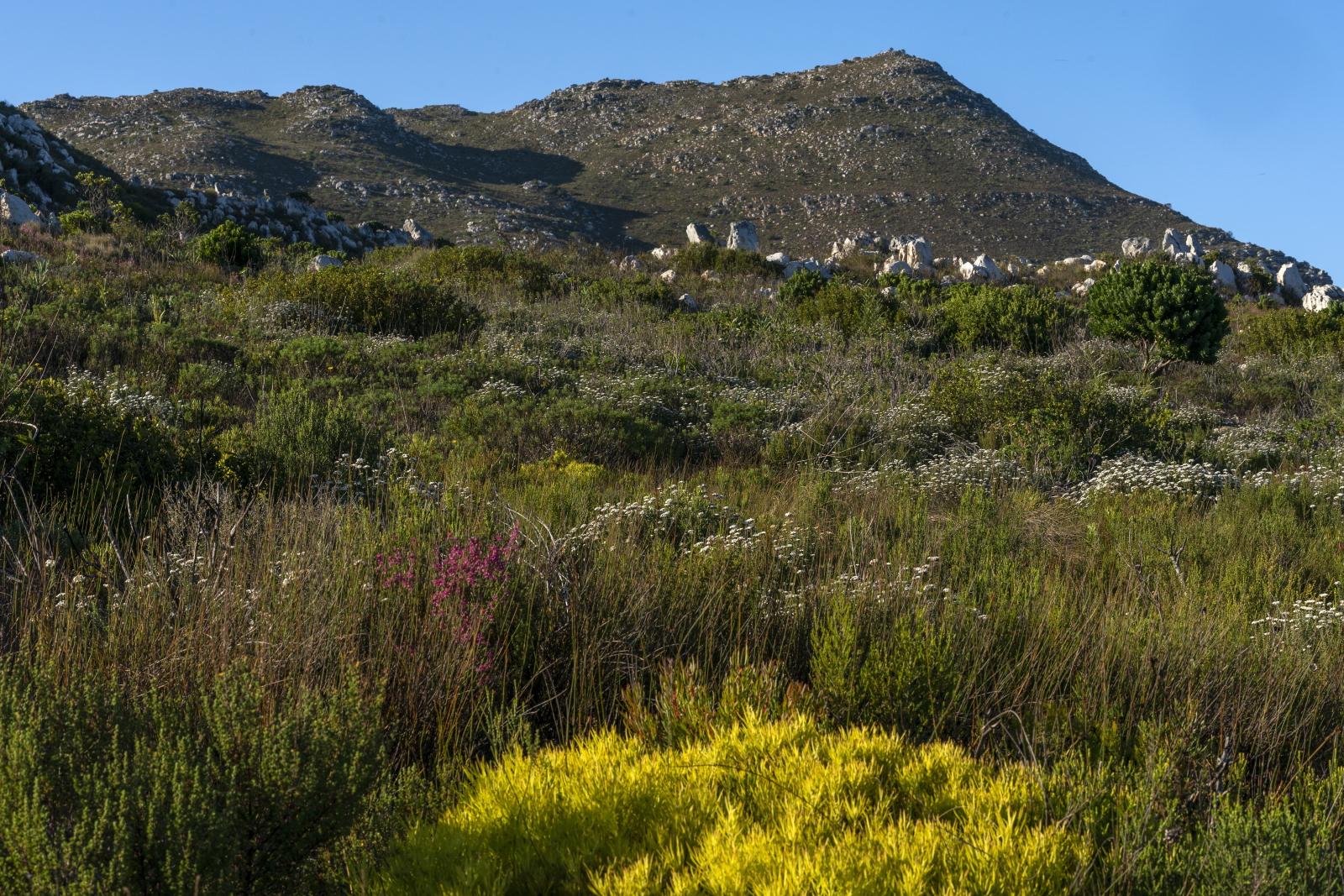 Światowy Dzień Środowiska - RPA Fot.  PAP/EPA/NIC BOTHMA