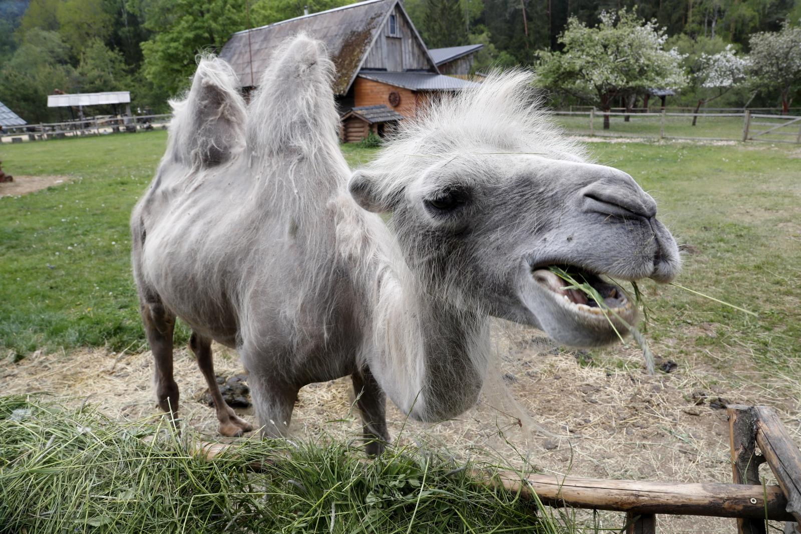 Z aparatem wśród zwierząt na Łotwie fot. PAP/EPA/Toms Kalnins