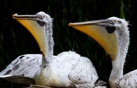 Zwierzęta w berlińskim zoo fot. EPA/HAYOUNG JEON