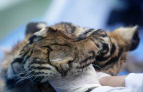 Handel dzikimi zwierzętami fot. EPA/HOTLI SIMANJUNTAK
