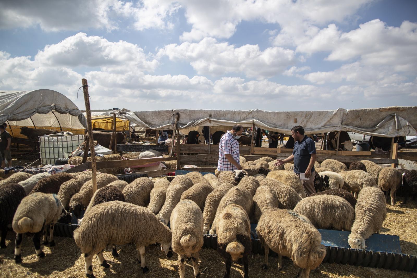 Owce fot. EPA/ERDEM SAHIN